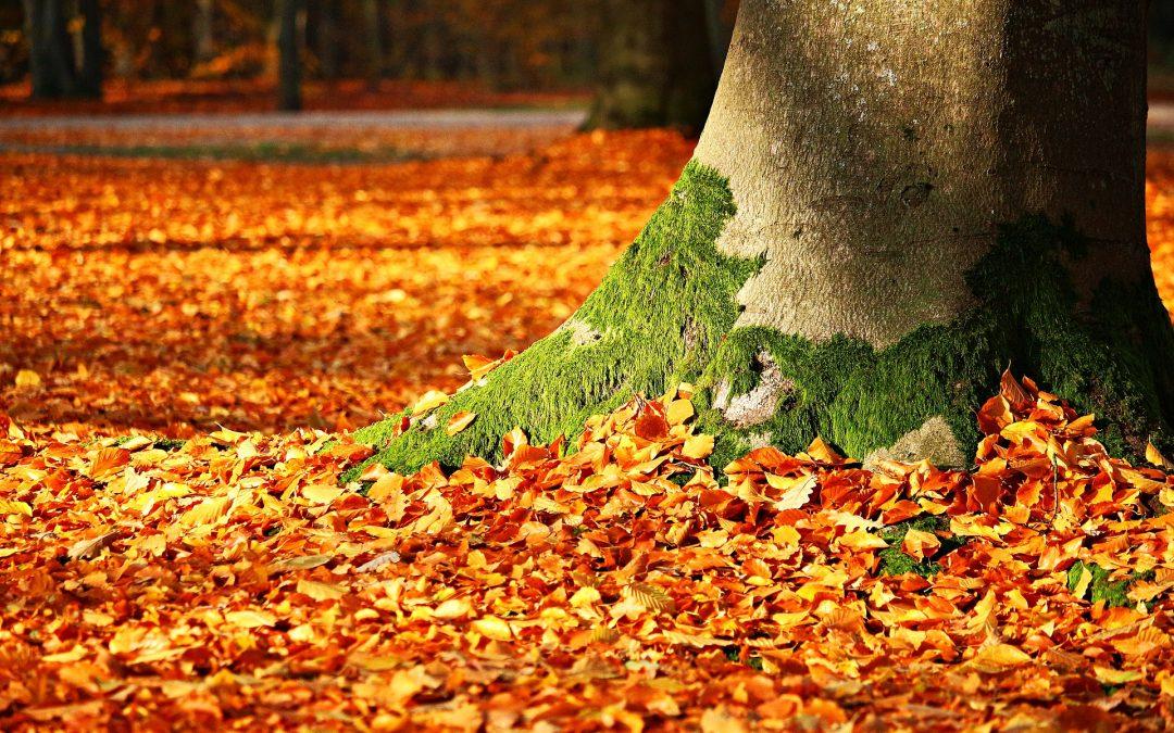 Gastartikel: Die Blätter werden wieder fallen
