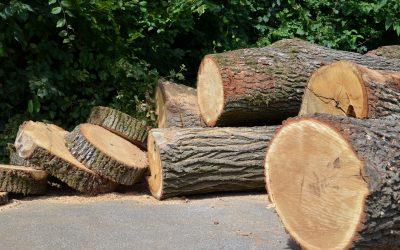 Doppelter Standard: Wie grüne Kräfte Wald UND Fortschritt zerstören wollen